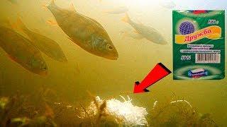 Рыба клюет на сыр или нет