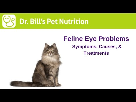 Feline Eye Problems | Symptoms, Causes, & Treatments | Dr. Bill's Advanced Nutritional Support