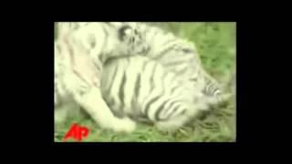 Котики. Свежая нарезка видео