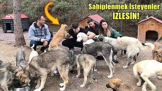 Ücretsiz Dogo Argentino , Rottweiler , Kangal (Subaşı Köpek Barınağına Gittik)