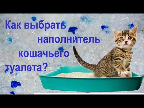 О наполнителях кошачьих туалетов