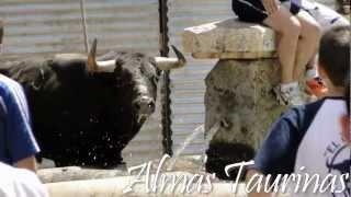 preview picture of video 'encierros del pilón Yunquera de Henares 1-7- 2012.'