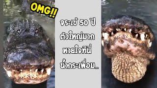 กล้าเข้าไปถ่ายใกล้ขนาดนี้ จิตใจทำด้วยอะไรกัน มันจะหิวไหม!!... #รวมคลิปฮาพากย์ไทย