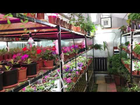 Цветочный дом Алматы. Комнатные цветы
