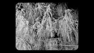"White Flowers – ""Help Me Help Myself"""