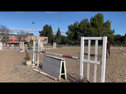 vente d'un cheval selle français