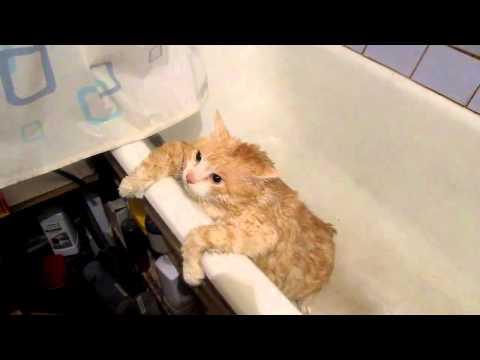 大肥貓洗澡後跳不出浴缸 超萌!