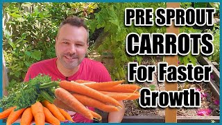 How to Grow Carrots! Best way to Pre sprout Carrot Seeds.