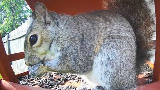 June 19 | TGIF Chipmunks, Birds and Squirrels - Videos For Cats