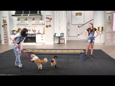 The Savitsky Cats Perform! - Pickler and Ben (видео)