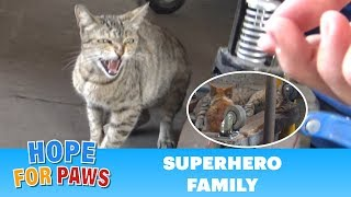 Superhero mom tells me to BACK OFF!!! (But her kittens were so cute).