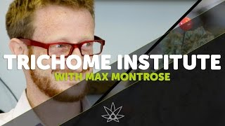 Trichome Institute Interview with Max Montrose  //  420 Science Club