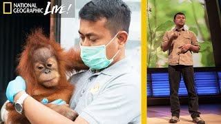 Saving Orangutans in Sumatra's Disappearing Rain Forests | Nat Geo Live