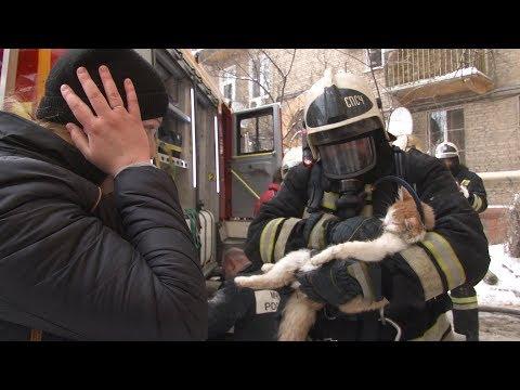 Кот ожил в руках спасшего его пожарного