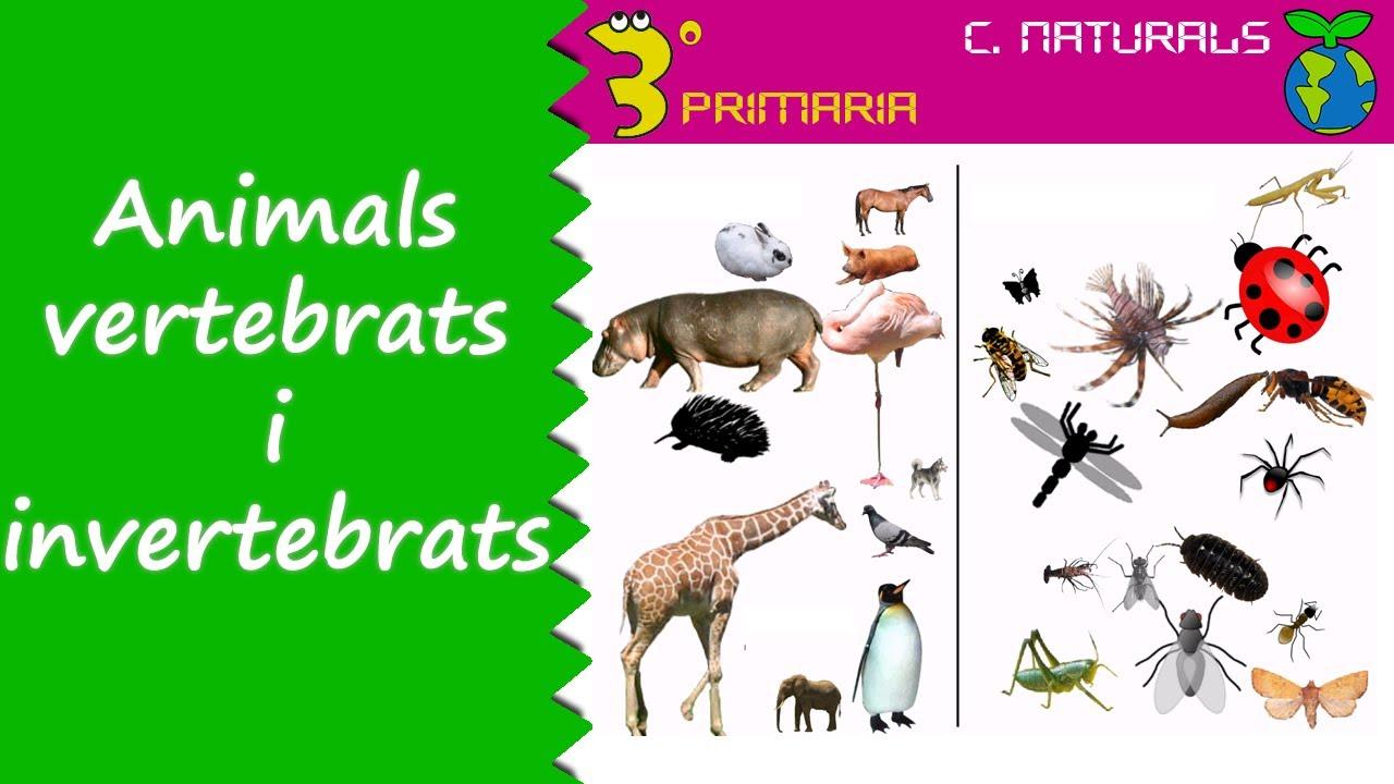 Ciències de la Naturalesa. 3r Primària. Tema 5. Animals invertebrats i vertebrats