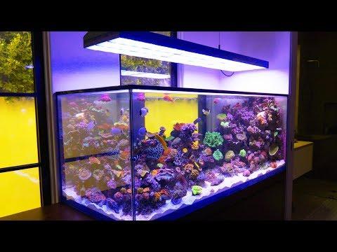 This Beverly Hills Aquarium is Completely Custom: Reef 301