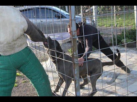Eccitatore per i cani comprare