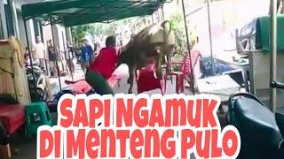 Video Sapi Ngamuk Di Menteng Pulo MP3, 3GP, MP4, WEBM, AVI, FLV Agustus 2019