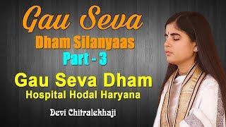 Gau Seva Dham Silanyaas Part - 3  Gau Seva Dham Hospital  Hodal Haryana Devi Chitralekhaji