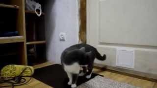 Смотреть онлайн Как сделать миниатюрную дверцу для кошки своими руками