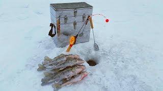 Ловля зимой берша на волге