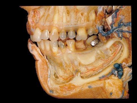มันเป็นไปได้ที่จะมีฟันหวานกับเวิร์ม