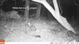 Wat een goed nieuws: een nest met vijf wilde katjes in ZuidLimburg