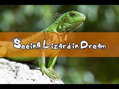 14 Dreams About Lizards Lizard Dream Meaning And Interpretation