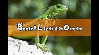 #14 Dreams About Lizards   Lizard Dream Meaning And Interpretation