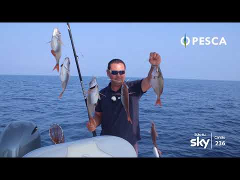 Pesca frolkovo il distretto di Ruza