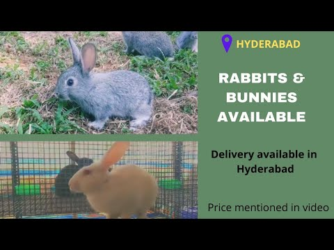 , title : 'RABBITS AND BUNNIES AVAILABLE | PETS SALE IN HYDERABAD | PETS BUDDY HYD