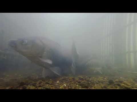 【びわ湖の漁業】伝統漁法編1 エリ漁