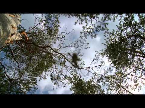 И. С. Бах - Badinerie - Музыкальная шутка