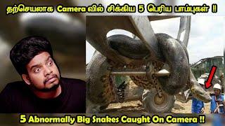 பார்த்தாலே பதறவைக்கும் 5 பாம்புகள் !!!!!   Unbelievably large snakes   RishiPedia   Tamil