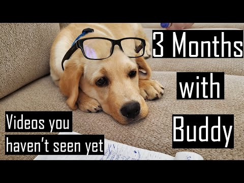 3 Months with our Labrador Puppy | Funny Videos you haven't Seen Yet (Hindi with English Subtitles)