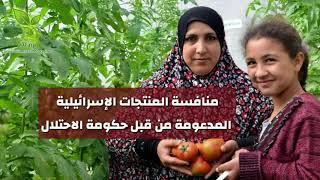 الزراعة في الأراضي ...