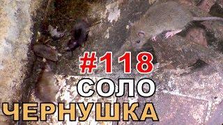 """#118. Реалити Шоу """"ALCARATZ"""". ДОМ 2 - Крысы. Чернушка - Соло"""