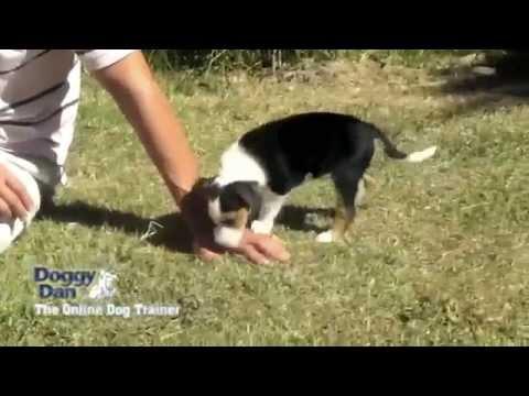 Animal Behavior College (ABC) - The Online Dog Trainer. - YouTube