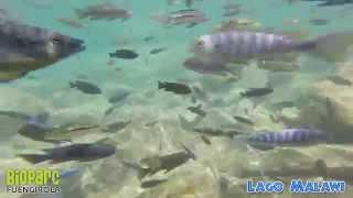 Snorkel En El Lago Malawi 3