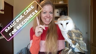 BASIC OWL CARE FOR BEGINNERS DOS & DONTS