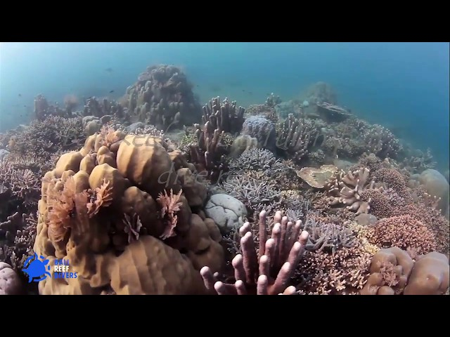 Tulamben diving Bali-Liberty wreck and Amed-Bali Reef Divers