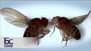 Великие мухи науки. Фильм 1