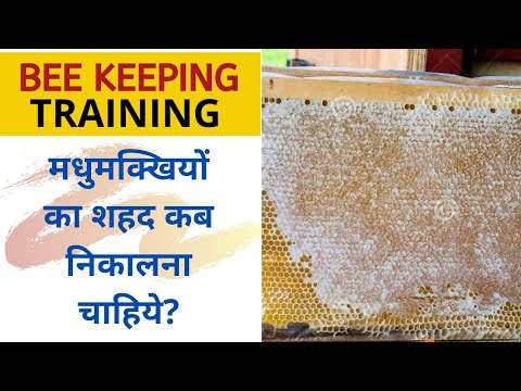 मधुमक्खियाँ खरीदने का सही समय || Perfect time to Buy Bees || Queen Bee || Bee Keeping