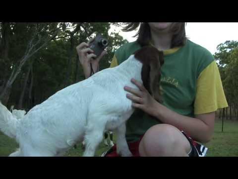 Baby Goat Really Wants Milk
