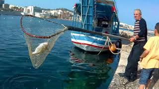 Рыбалка с берега на мальте