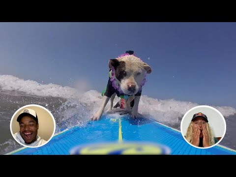 Sharks, Surfing Dogs And Party Waves    Athletes React