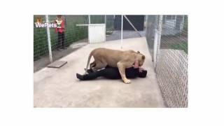 Phản ứng bất ngờ của cô sư tử khi gặp người nhận nuôi mình - WePets
