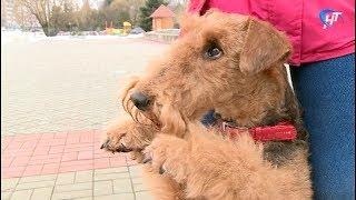Грядущий год земляне проведут под покровительством желтой собаки