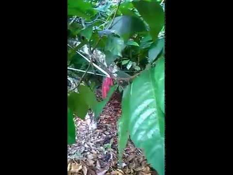 repelente con cintas auyentadoras de ardillas unidad Educativa Agropecuaria puebloviejo