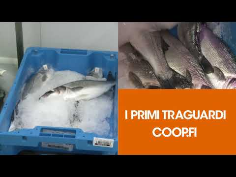 Pillola video Pesce in cassa azzurra